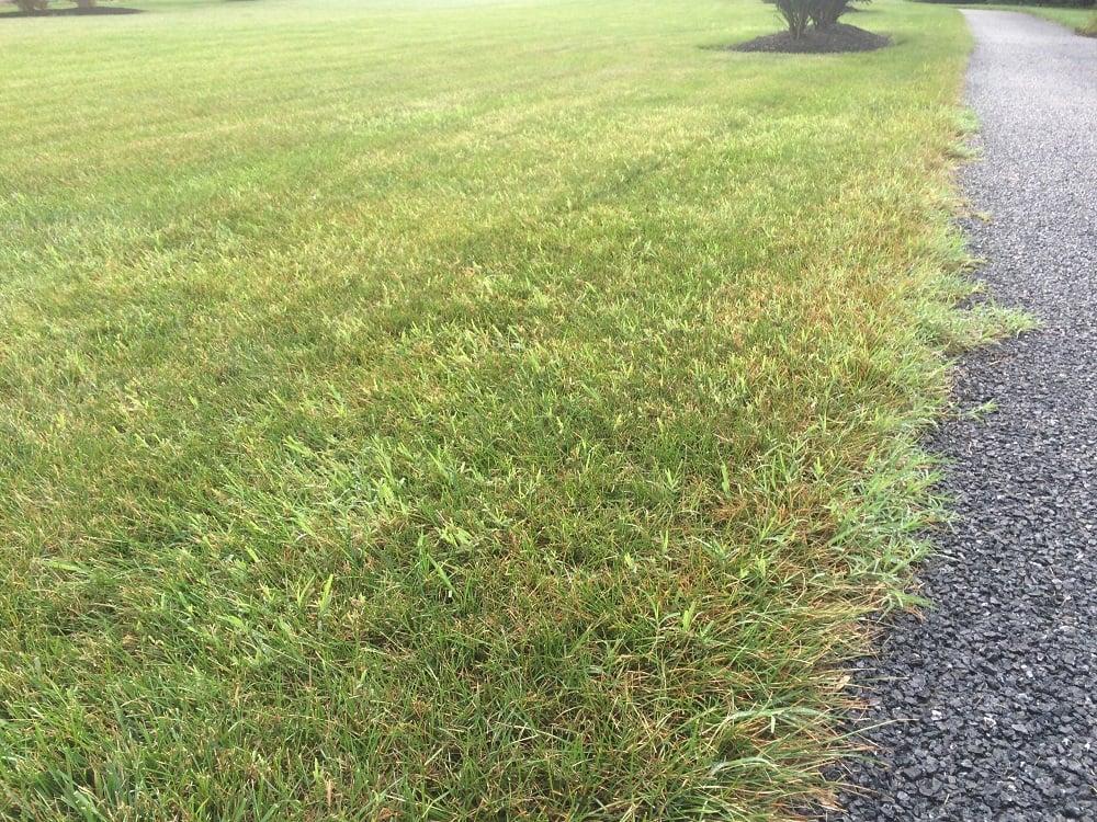 Bermudagrass a warm Season Turfgrass