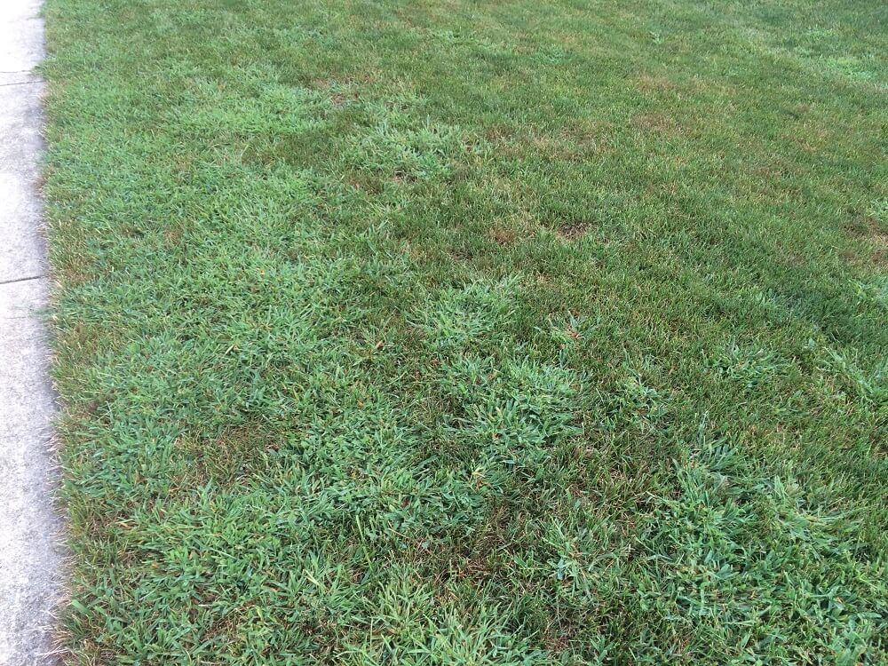 lawn without crabgrass preventer