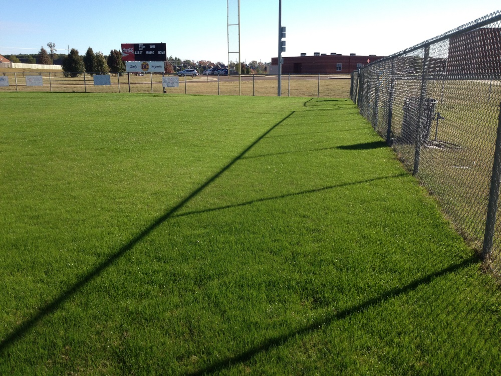 Rye grass in Memphis, TN
