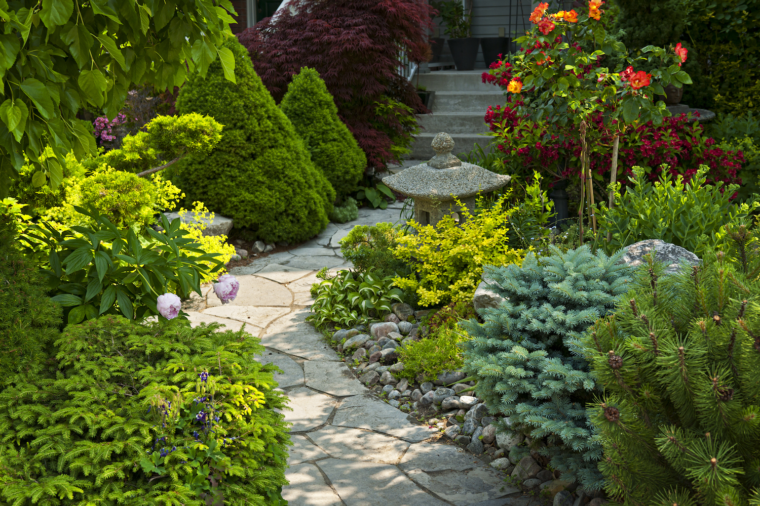 healthy trees and shrubs with plant health care services