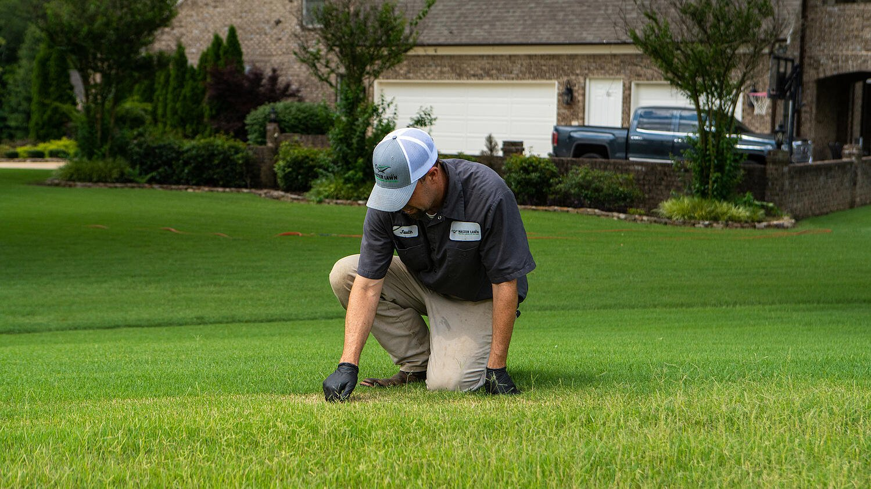 lawn care technician inspecting a lawn