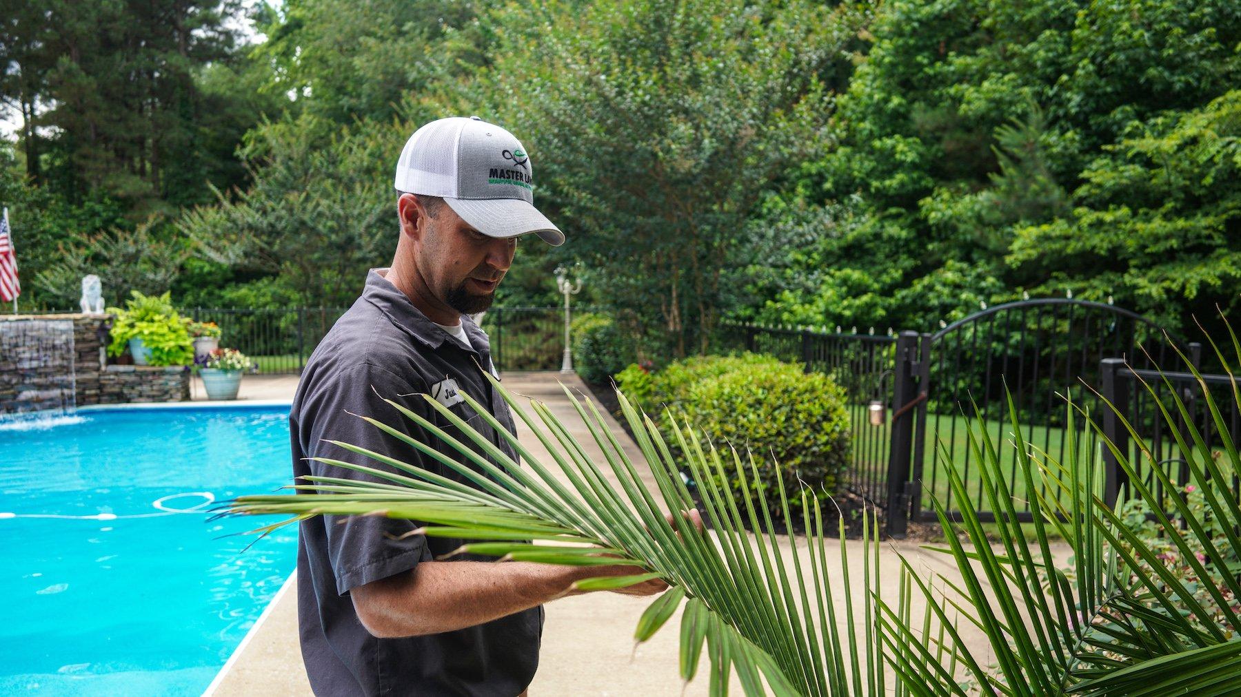 Plant health care technician inspecting plants