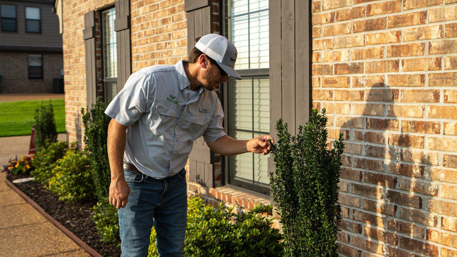 Plant health inspection