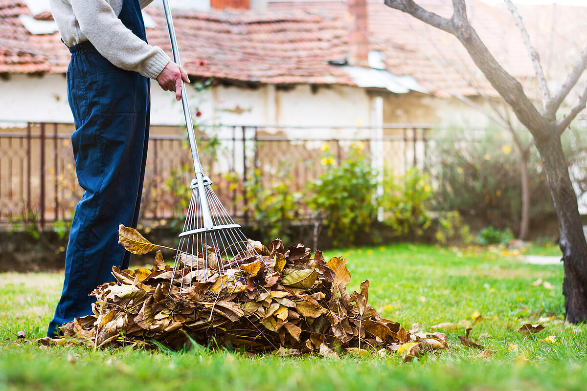 lawn care fall cleanup