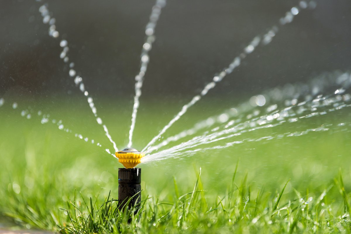 What S The Best Time To Water Lawns In Tennessee Amp Mississippi