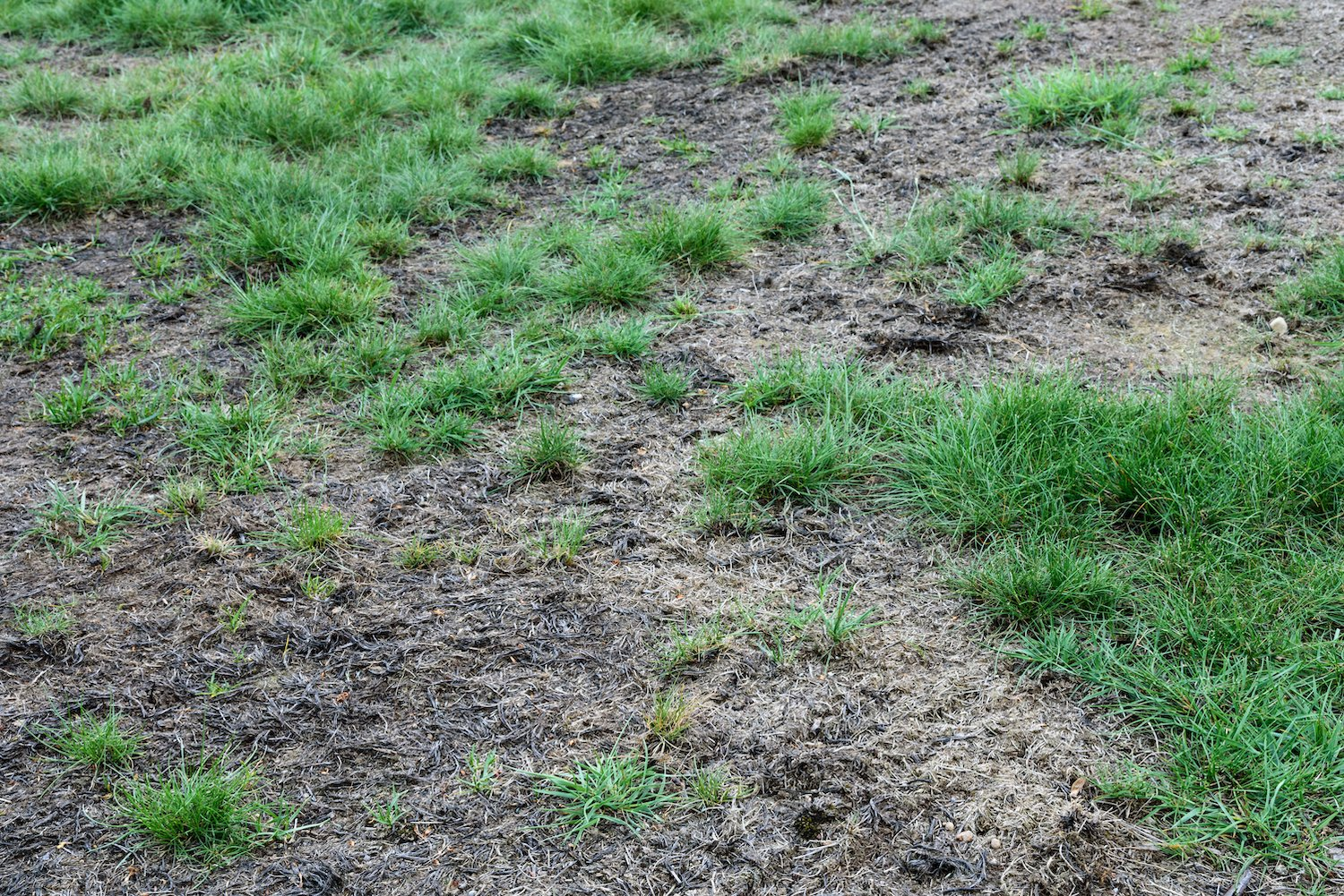 How To Tell The Difference Between Dead And Dormant Grass